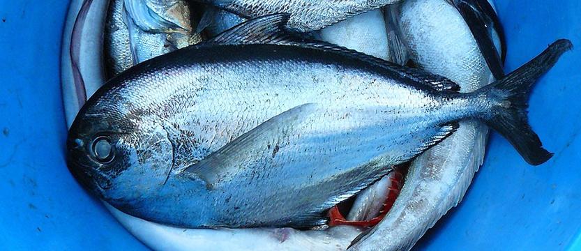 Fish market Senj